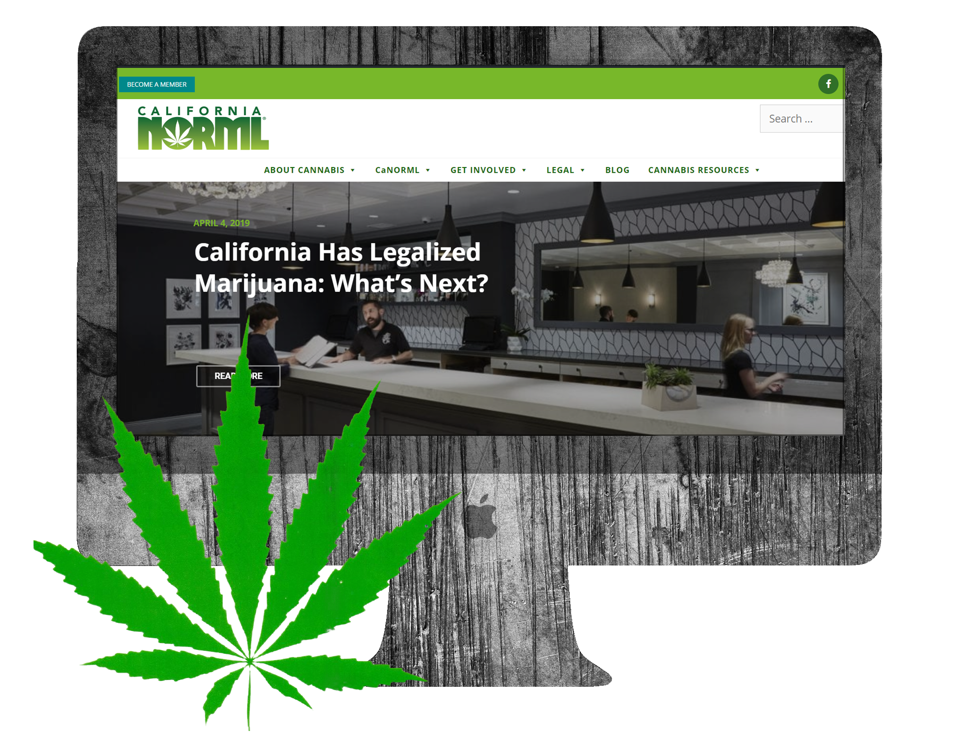 CaNORML Leaf - Future Bright Website Design